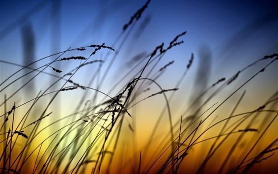 Fond d'écran Nature paysage, coucher de soleil, l'herbe