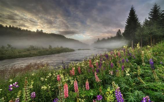 Wallpaper Norway, forest, river, trees, fog, flowers, summer, morning