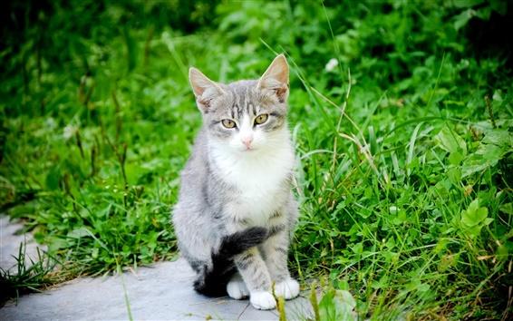 Fond d'écran Un chat, tomcat, moustaches, nature verte