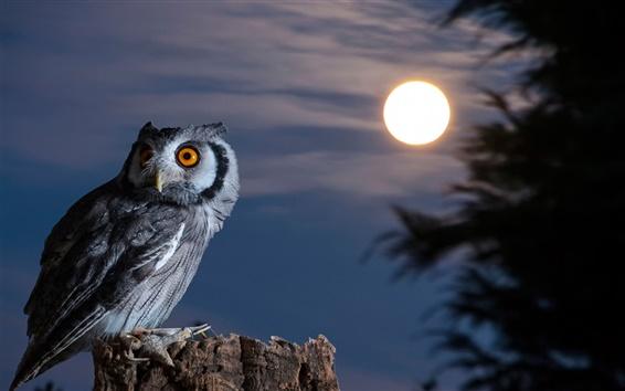 壁紙 夜にフクロウ、月、鳥