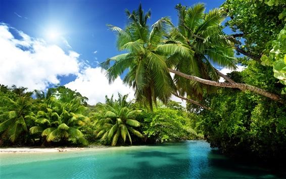 Обои Пальмы, тропический, морской, голубая вода, летние