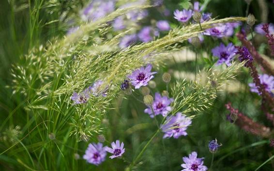 Обои Фиолетовые цветы, трава, лето