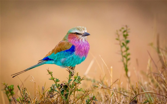 Wallpaper Rainbow feather bird, colorful