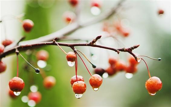 Papéis de Parede Red cerejas, bagas, ramos, chuva