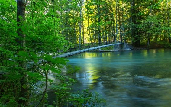 Fond d'écran Rivière, forêt, pont, été, nature paysage