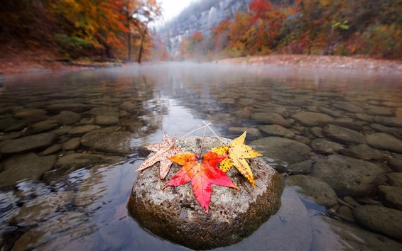 Wallpaper River, stones, maple leaves, autumn, morning