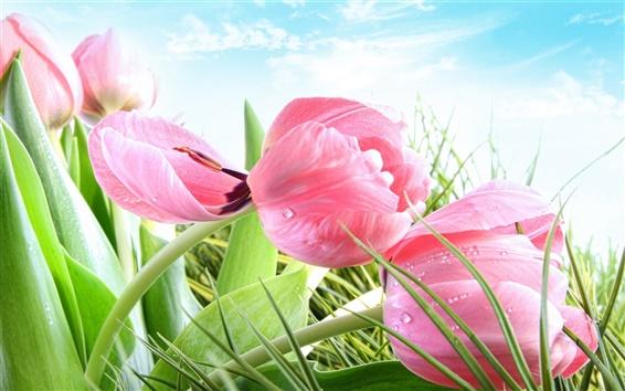Wallpaper Spring, pink flowers, grass, tulips