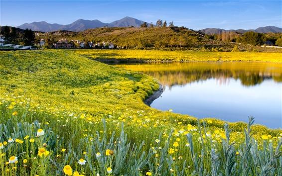 Обои Лето природа, цветы, трава, озеро, небо