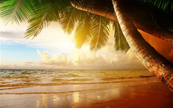 Wallpaper Summer tropical scenery, sunset, sea, ocean, palm trees, sunset