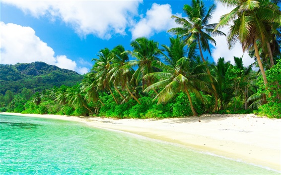 Wallpaper Tropical, paradise, beach, coast, sea, palm trees, summer