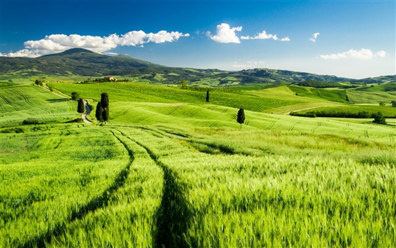 Wallpaper Tuscany, Italy, green fields, spring