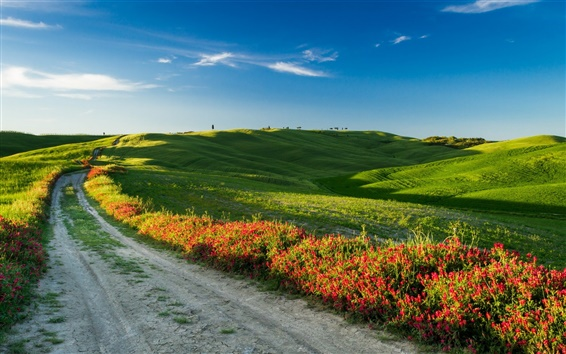 Wallpaper Tuscany, Italy, nature landscape, fields, road, flowers