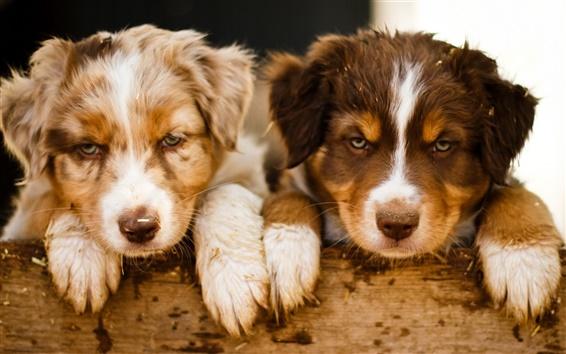 Papéis de Parede dois cães