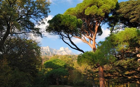 Fondos de pantalla Ucrania, Crimea, árboles, montañas, parque, naturaleza