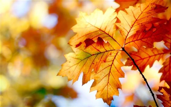 Wallpaper Autumn leaves, bokeh, colors