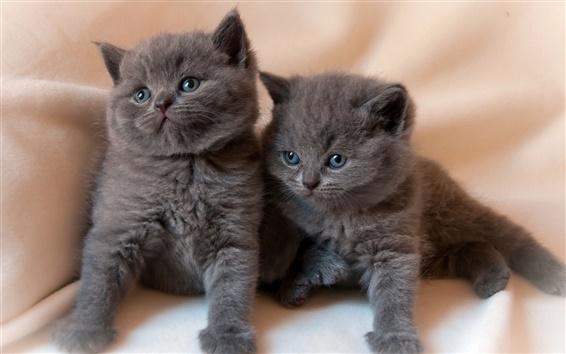 Wallpaper Black kittens, twins