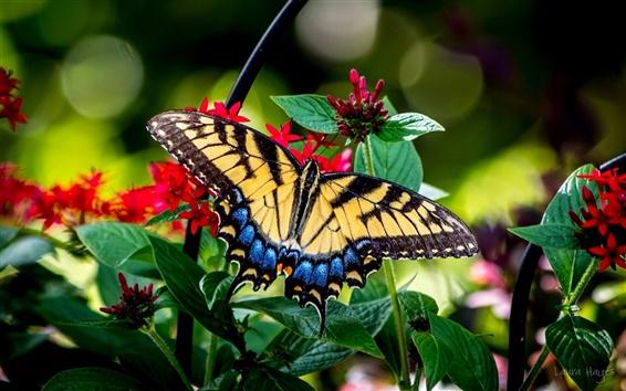 Wallpaper Butterfly, flowers, macro