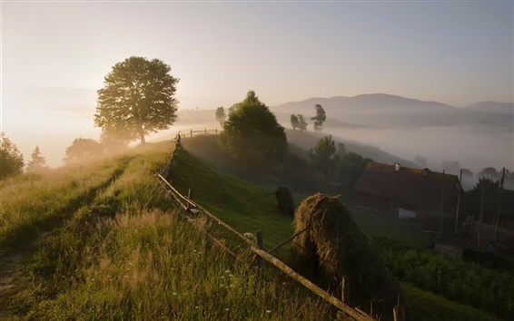 Wallpaper Carpathian mountains, trees, countryside, morning, fog, summer