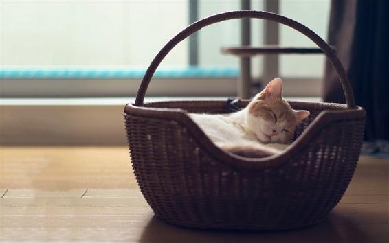배경 화면 바구니에 귀여운 고양이의 잠