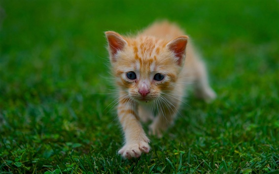 壁紙 かわいい子猫、草、緑、夏