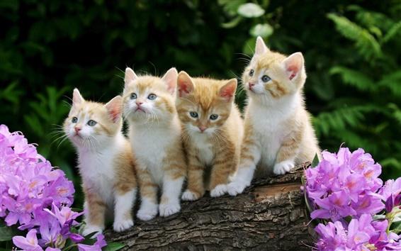 배경 화면 귀여운 새끼 고양이, 모피, 꽃