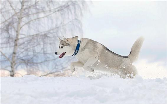Wallpaper Dog running in winter