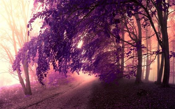Fond d'écran Forêt, la brume, la route, les arbres, les feuilles, le style violet