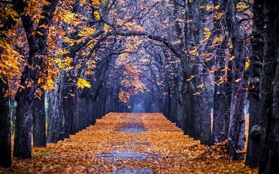 Papéis de Parede Floresta, parque, árvores, folhas, caminho