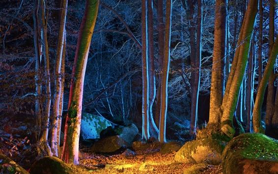 Wallpaper Forest, trees, autumn, night, lights