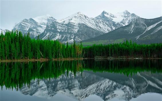 Обои Герберт озеро, Национальный парк Банф, горы, отражение воды