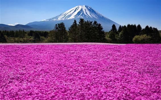 Wallpaper Japan, Fuji volcano, mountain, trees, flowers