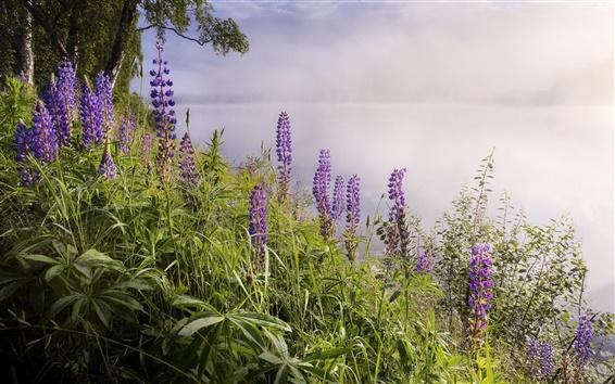 Fond d'écran Lac, brouillard, fleurs, matin