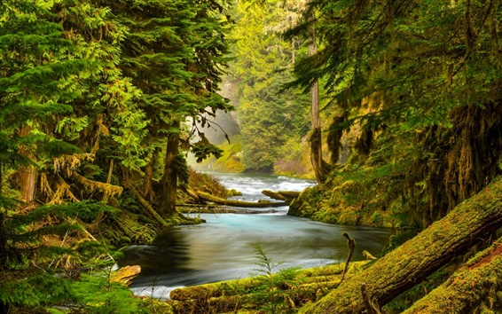 Wallpaper McKenzie River, Oregon, forest, trees, moss