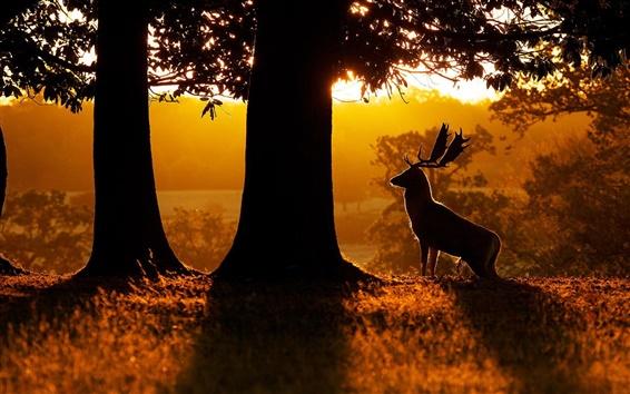 Papéis de Parede Manhã, natureza, floresta, árvores, veados