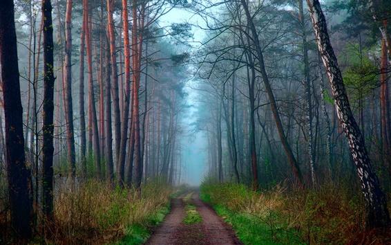 Fond d'écran Matin nature, ressort, forêt, route, brouillard