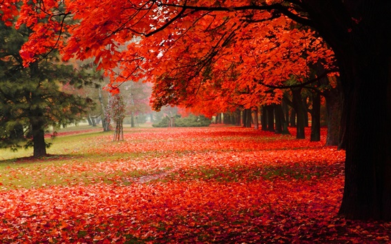 Wallpaper Nature scenery, park, autumn, red foliage