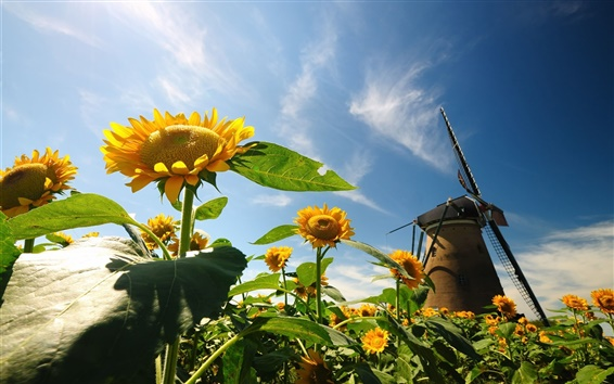 Wallpaper Nature, sunflowers, leaves, windmill, blue sky