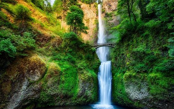 Wallpaper Oregon, USA, waterfall, stream, forest, trees, bridge, rock