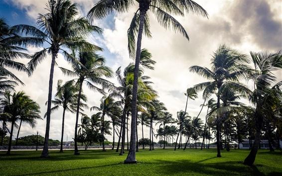 Обои Пальмы, пляж, Майами, Флорида, США
