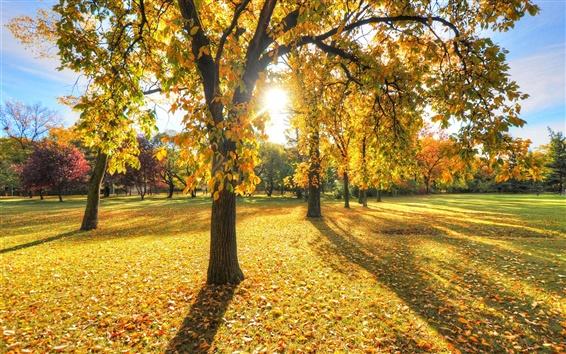 Wallpaper Park, trees, grass, leaves, autumn, sunset