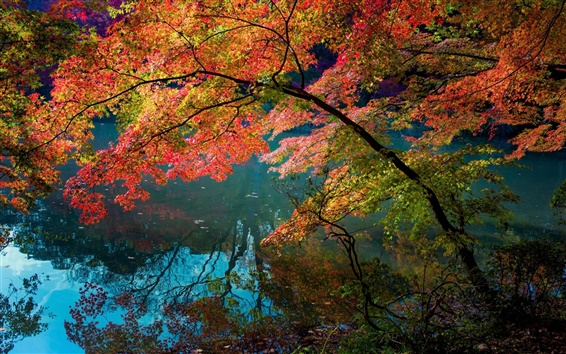 Wallpaper River, water reflection, trees, red color leaves