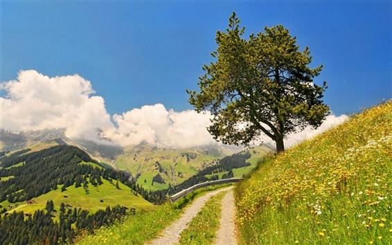 Обои Дорога, небо, горы, трава, цветы, деревья