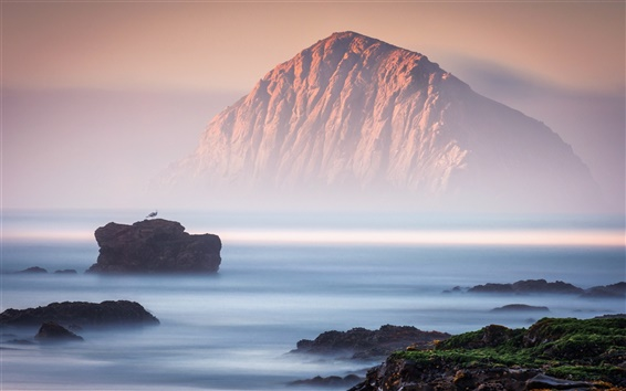 Wallpaper Rocks, sea, fog, bird, nature landscape