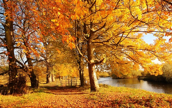 Wallpaper Scotland, Motherwell, nature forest autumn, trees, yellow leaves, river