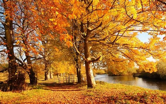 Обои Шотландия, Мотеруэлл, природа лес осень, деревья, желтые листья, река