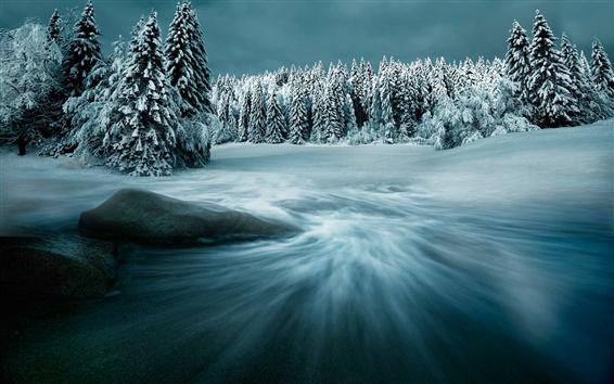 Wallpaper Snow, winter, trees, night