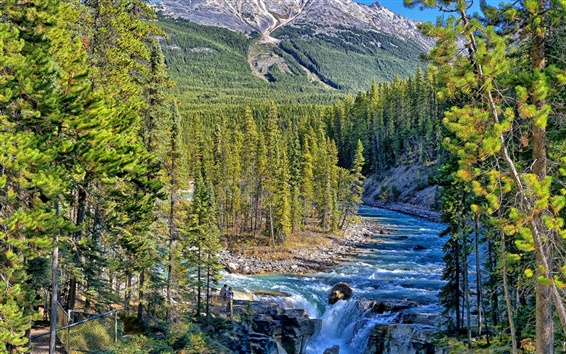 Wallpaper Sunwapta Falls, Jasper National Park, Alberta, Canada, trees
