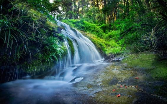 Обои Таиланд, лес, листья, водопады, поток, деревья