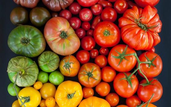 Wallpaper Tomatoes, multi-colored