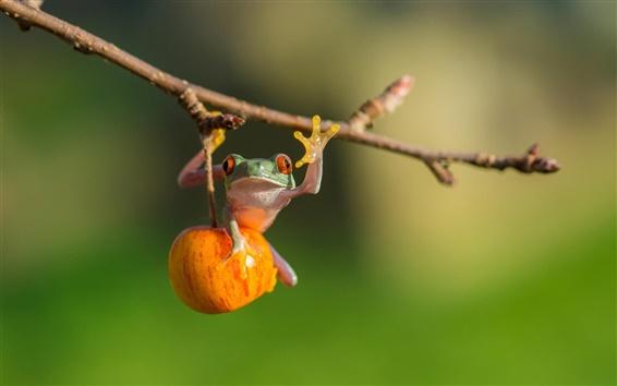 배경 화면 나무 개구리, 사과, 나뭇 가지